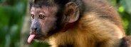 Амазония: инструкция по выживанию